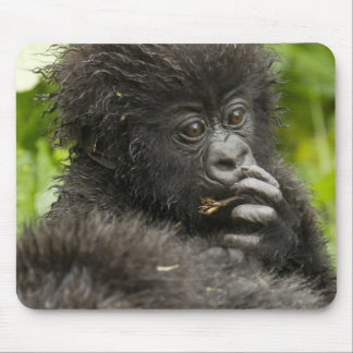 Mountain Gorilla, baby riding on mothers back Mouse Mat