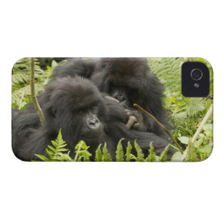 Mountain Gorilla, family in day nest iPhone 4 Case-Mate Case