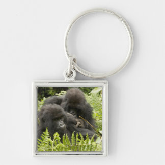 Mountain Gorilla, family in day nest Key Ring