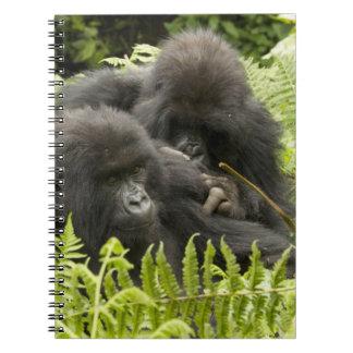 Mountain Gorilla, family in day nest Notebooks