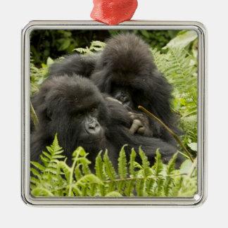 Mountain Gorilla, family in day nest Silver-Colored Square Decoration