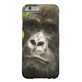 Mountain Gorilla, Gorilla beringei beringei, Barely There iPhone 6 Case