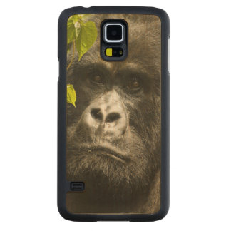 Mountain Gorilla, Gorilla beringei beringei, Carved Maple Galaxy S5 Case