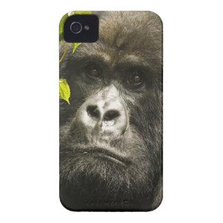 Mountain Gorilla, Gorilla beringei beringei, Case-Mate iPhone 4 Case