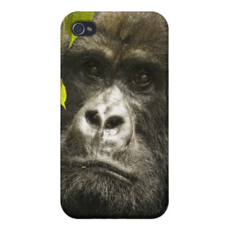 Mountain Gorilla, Gorilla beringei beringei, iPhone 4 Case