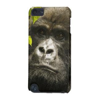 Mountain Gorilla, Gorilla beringei beringei, iPod Touch 5G Cover