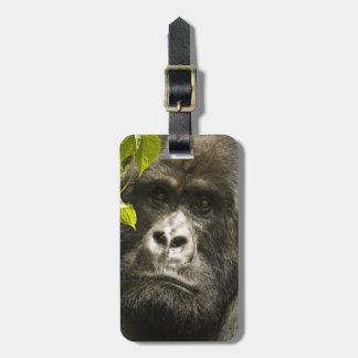 Mountain Gorilla, Gorilla beringei beringei, Luggage Tag