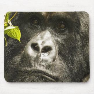 Mountain Gorilla, Gorilla beringei beringei, Mouse Mat