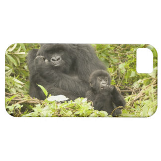 Mountain Gorilla, Gorilla beringei (formerly G. Barely There iPhone 5 Case