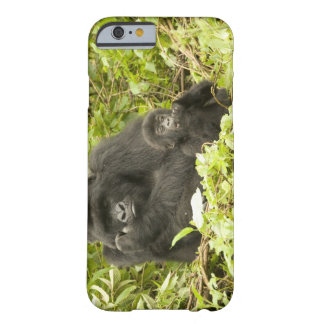 Mountain Gorilla, Gorilla beringei (formerly G. Barely There iPhone 6 Case