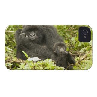 Mountain Gorilla, Gorilla beringei (formerly G. iPhone 4 Case-Mate Case