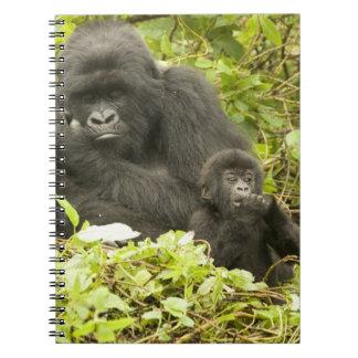 Mountain Gorilla, Gorilla beringei (formerly G. Notebook