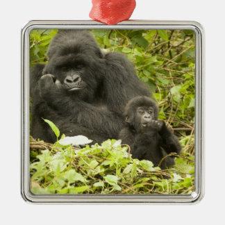 Mountain Gorilla, Gorilla beringei (formerly G. Silver-Colored Square Decoration