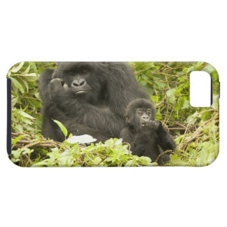 Mountain Gorilla, Gorilla beringei (formerly G. Tough iPhone 5 Case