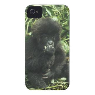 Mountain Gorilla, (Gorilla gorilla beringei), Case-Mate iPhone 4 Cases