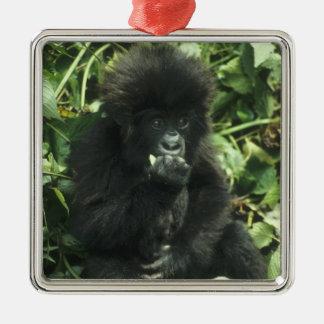 Mountain Gorilla, (Gorilla gorilla beringei), Silver-Colored Square Decoration
