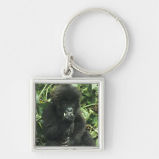 Mountain Gorilla, (Gorilla gorilla beringei), Silver-Colored Square Key Ring