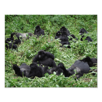 Mountain gorilla group photo print