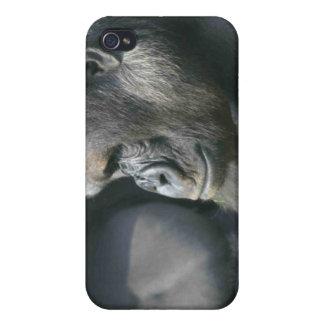 Mountain Gorilla iPhone Case iPhone 4/4S Cases