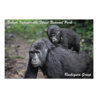 Mountain Gorilla/ Mother & Baby Poster