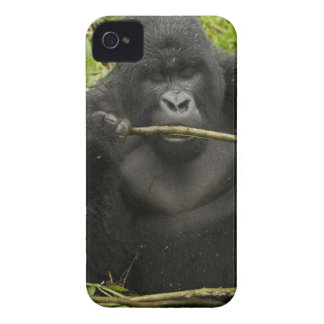 Mountain Gorilla, using tools iPhone 4 Cover