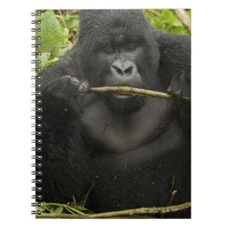 Mountain Gorilla, using tools Notebook