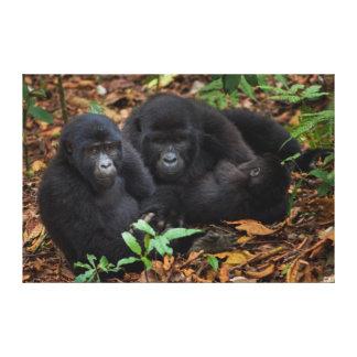 Mountain Gorillas, Volcanoes National Park Canvas Print
