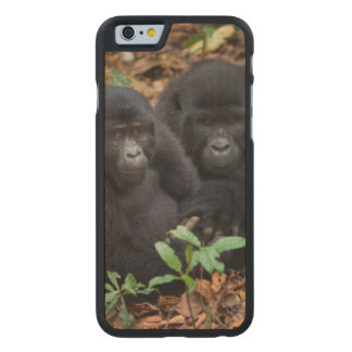 Mountain Gorillas, Volcanoes National Park Carved Maple iPhone 6 Case