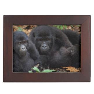 Mountain Gorillas, Volcanoes National Park Memory Boxes