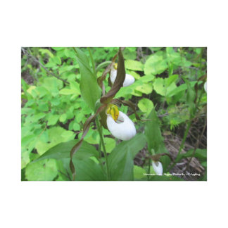"Mountain Lady Slipper Orchid Canvas 20"" x 16"""