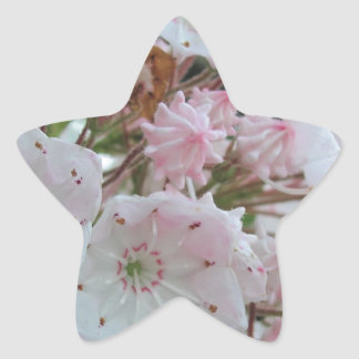 Mountain Laurel Products Star Sticker