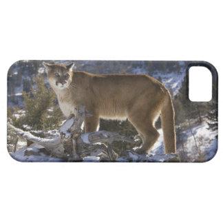 Mountain Lion, aka puma, cougar; Puma concolor, iPhone 5 Cover