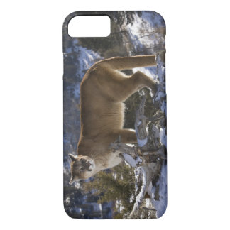 Mountain Lion, aka puma, cougar; Puma concolor, iPhone 8/7 Case