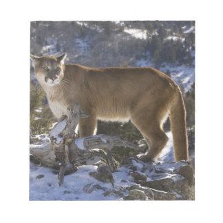 Mountain Lion, aka puma, cougar; Puma concolor, Notepad