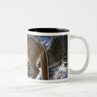 Mountain Lion, aka puma, cougar; Puma concolor, Two-Tone Coffee Mug
