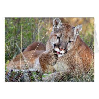 Mountain Lion - Hmmm Card