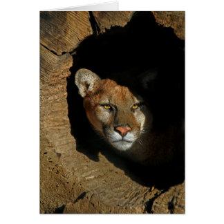 Mountain Lion in Log Greeting Card