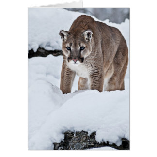 Mountain Lion in the Snow Card