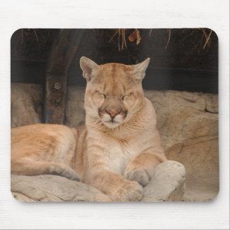 Cougar Feline Perfection