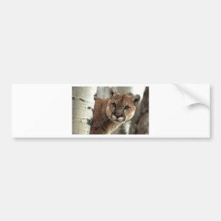 Mountain Lion Striking a Pose Bumper Sticker