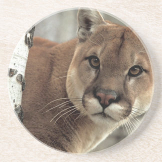 Mountain Lion Striking a Pose Coaster
