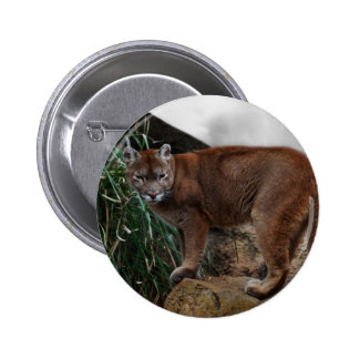 Mountain lions stance 6 cm round badge