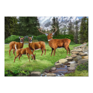 Mountain Red Deer Safari Card