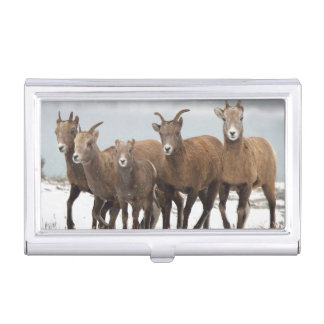 Mountain Sheep Family Business Card Holder