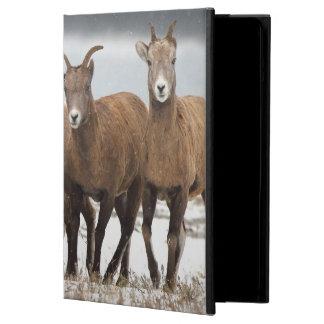 Mountain Sheep Family iPad Air Case
