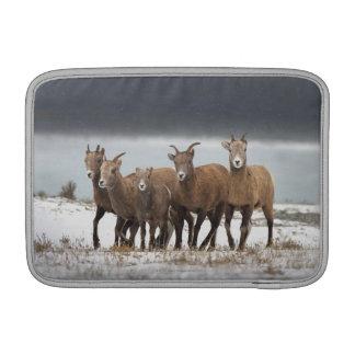 Mountain Sheep Family MacBook Sleeve