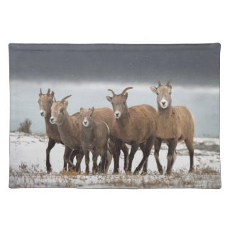 Mountain Sheep Family Placemat
