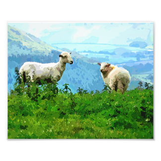 MOUNTAIN SHEEP PHOTO PRINT