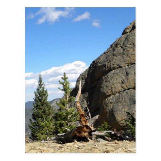 Mountain tree stump postcards