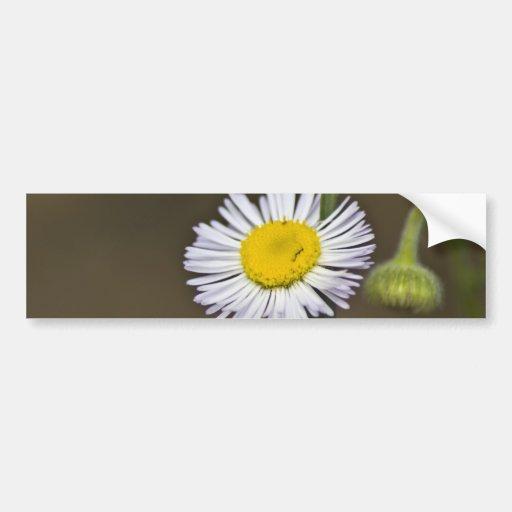 Mountain Wildflower Bumper Sticker